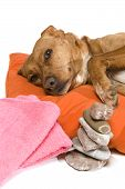 Zen moment and Spa treatment for dog poster