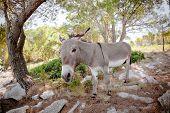 Mediterranean donkey shot in Croatia - fish eye poster