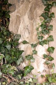 Leafy Rock