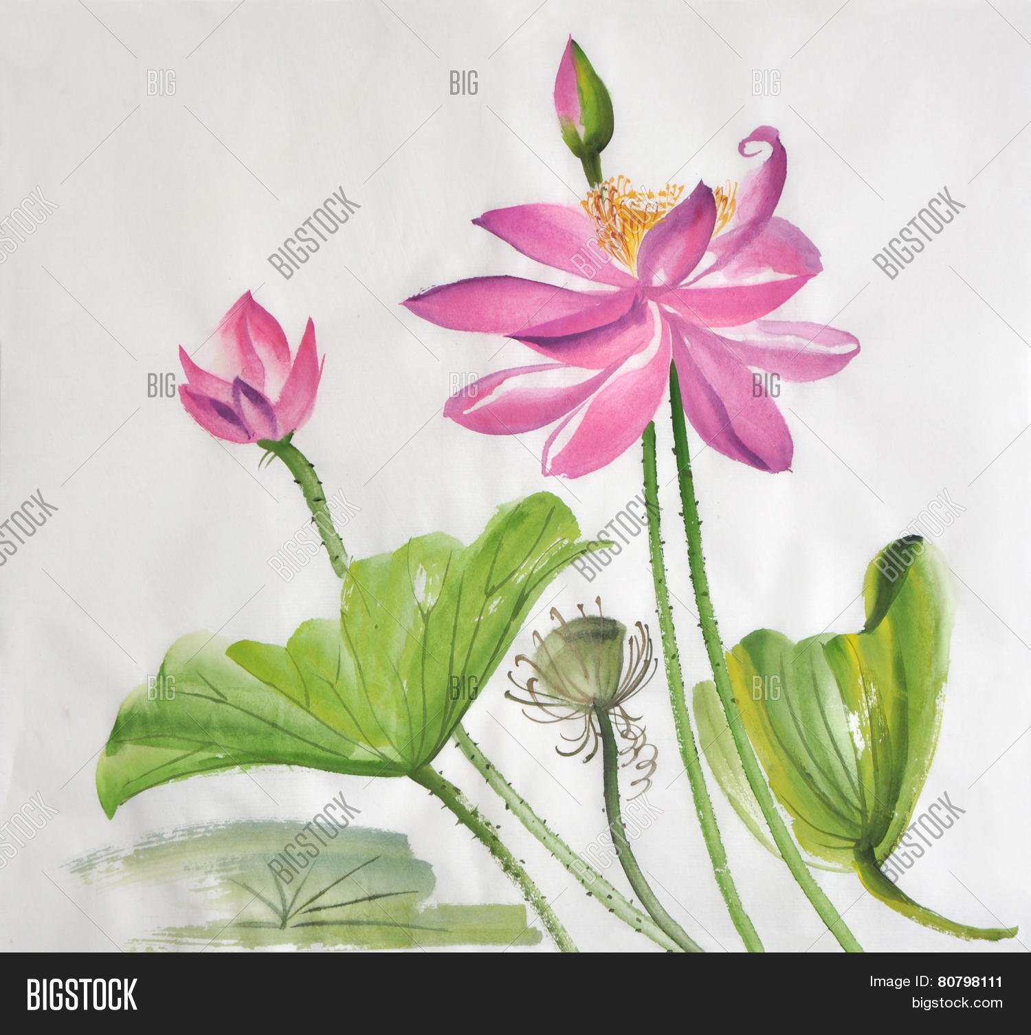 Lotus Flower Image Photo Free Trial Bigstock