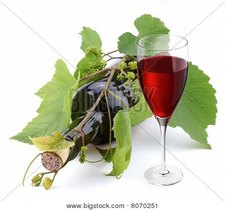 Bottle of wine twined with vine