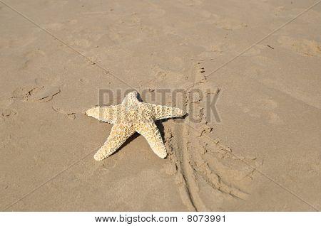Large Star Fish on Sandy Beach