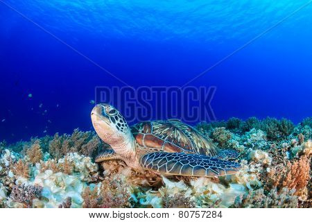 Sea Turtle On A Tropical Coral Reef With Sunbeams Above