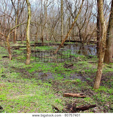 Kyte River Floodplain Forest Illinois