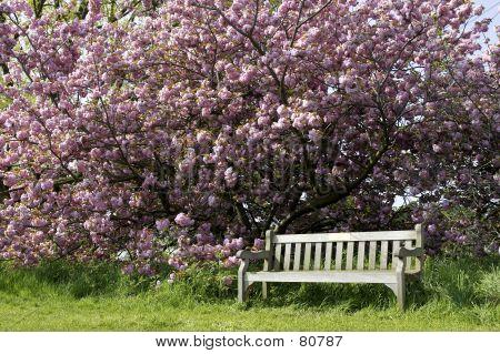 Single Empty Park Bench
