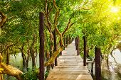Tropical exotic travel concept - wooden bridge in flooded rain forest jungle of mangrove trees near Kampong Phluk village, Cambodia poster