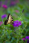 Yellow Butterfly on Purple Flower poster