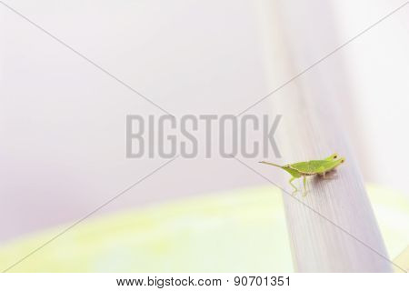 Green grasshopper perched on a metal rod