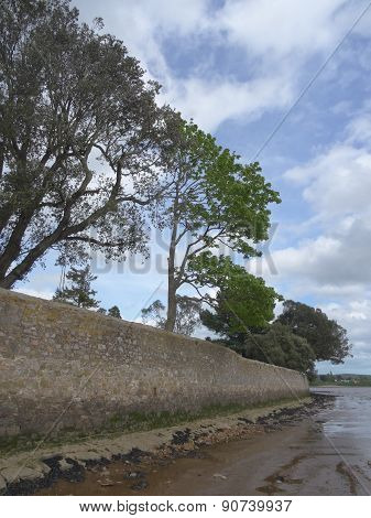 Tree Lined Wall And Beach Riverscape