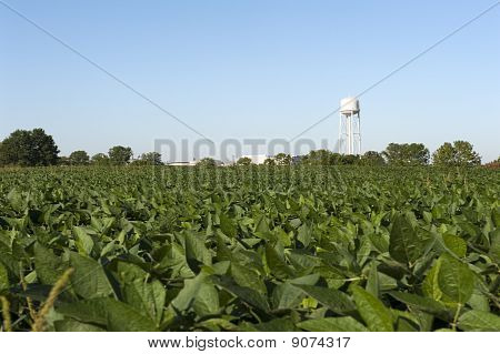 Farm Field And Water Tower