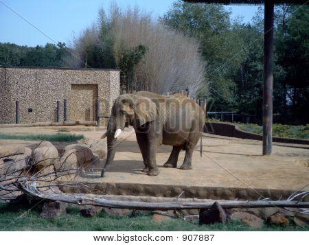 Elephantold