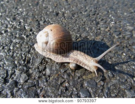 big snail going over small one