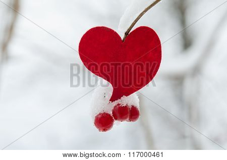 Red heart with Viburnum Berries Covered With Snow On Tree