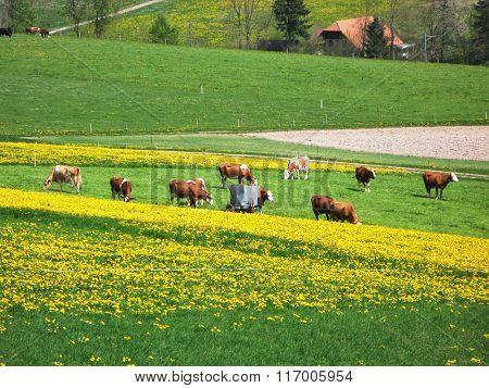 Spring in Emmen valley (Emmental), Switzerland