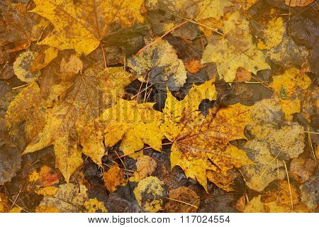 Yeallow Autumn Leaves Pattern On The Ground