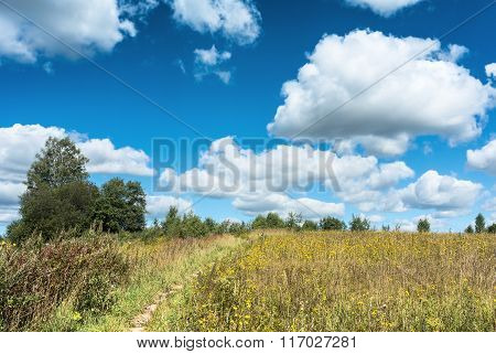 Summer natural agricultural field landscape: beautiful meadow with yellow wildflowers under summer blue sky with white clouds under bright summer sunlight near village landscape poster