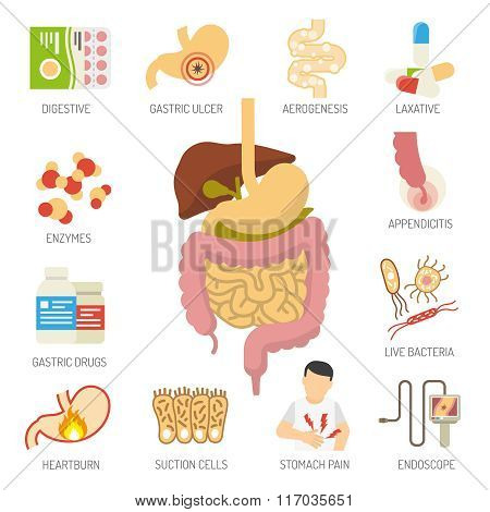 Digestive System Icons Set