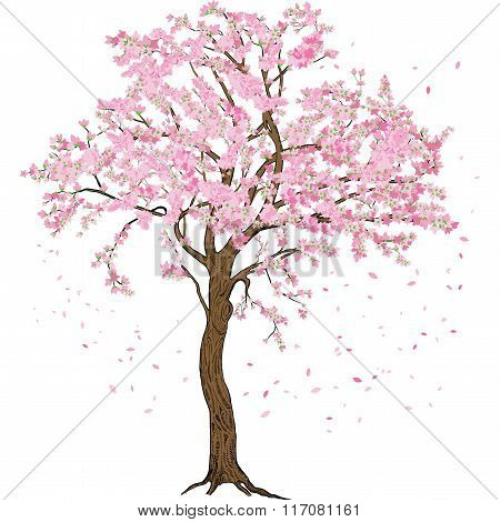 Isolated sakura spring blossom blooming tree with flowers illustration with detailed drawing bark fo