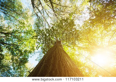 Forest treetops on a sunny day