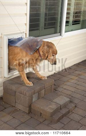 Doggie Door And Pet