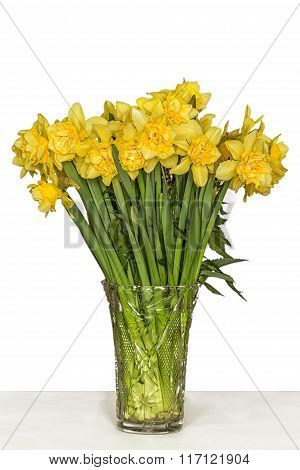 Yellow Narcissus In Vase