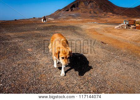 Stray Pooch In The Desert