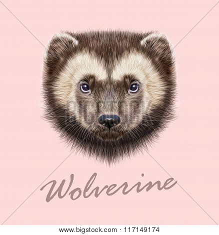 Wolverine Animal. Vector Illustrated Portrait