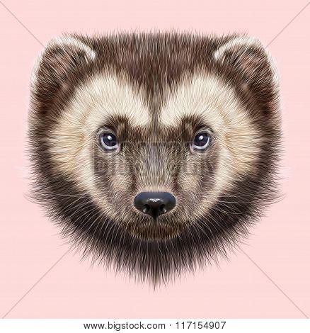 Wolverine Animal. Illustrated Portrait