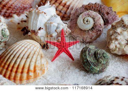 Image Of Seashells And Starfish