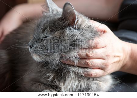 Hands of young woman  on gray cat, retro toning, colorized shot