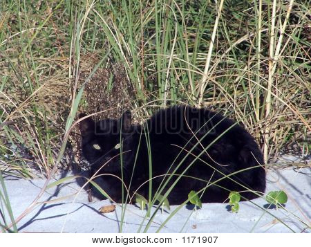 Green-Eyed Beach Cat