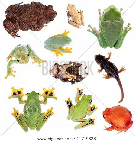 Backside of Frogs set on white