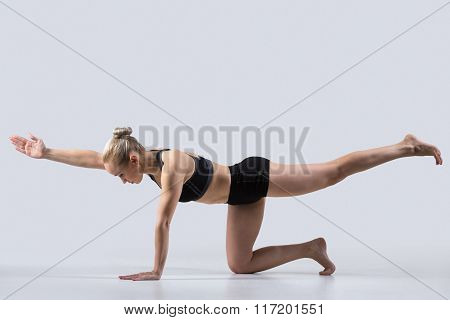 Bird Dog Pose, Chakravakasana