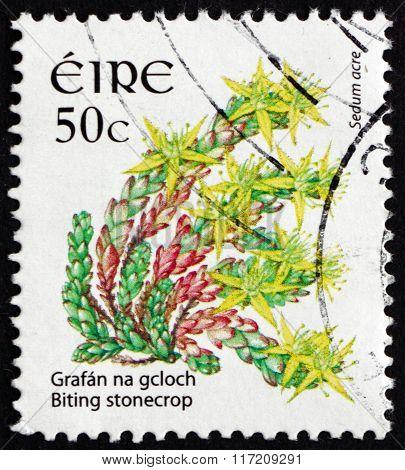 Postage Stamp Ireland 2008 Biting Stonecrop, Flowering Plant