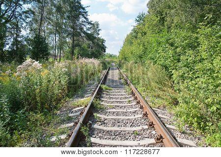 Overgrown single-track railway