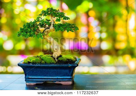 Close Up Shot Bonsai On Bokeh Background