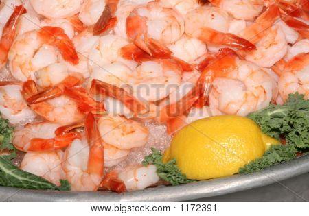 Shrimp5531