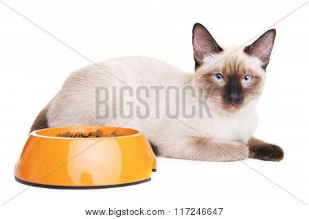 Thai Cat With Food Bowl