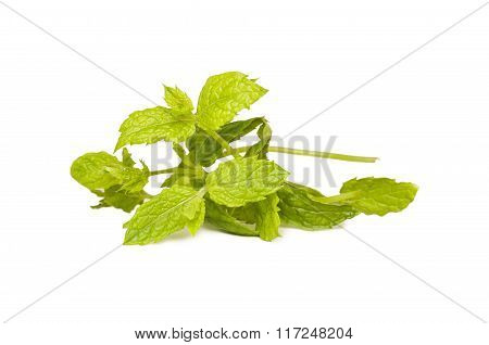 Leaves Fresh Mint Isolated.
