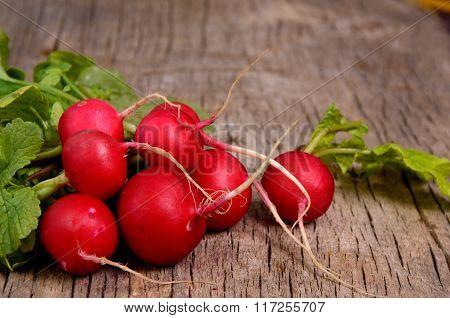 row of radishes
