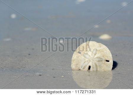 Sand Dollar In The Ocean Shore At Beach