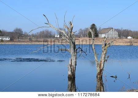 the last standing tree in a reclaimed wetland