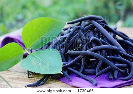 Blue beans in the garden