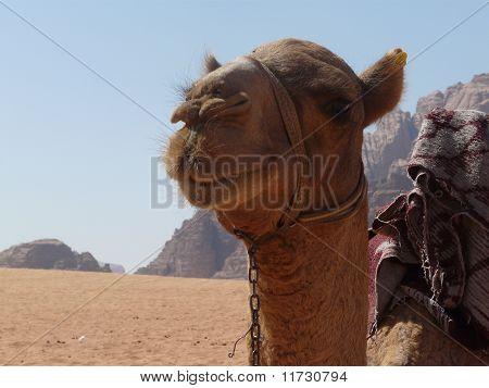 die Wüste Wadi Rum in Jordanien