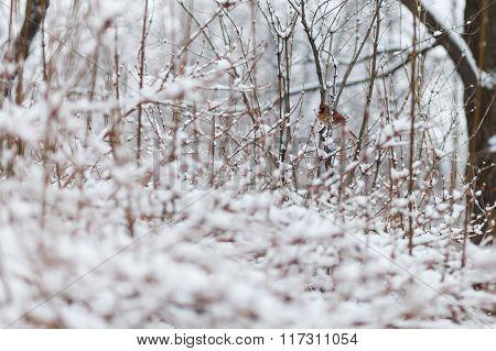 Bird In The Winter