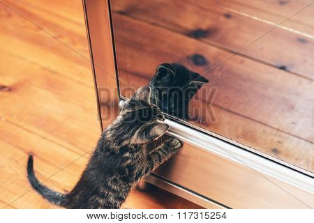 Adorable Little Kitten Looking At Its Reflection