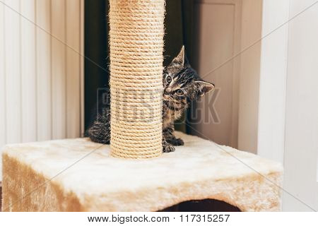 Cute Little Kitten Peering At The Camera