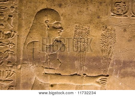 Ancient egyptian stone carving of a priestess presenting wheat crop harvest to the gods.  Interior of the Temple of Horus at Edfu, Egypt. poster