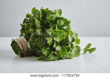 Batch Of Fresh Parsley, Cilantro, Tied Craft Rope,