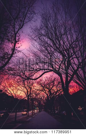 Colorful Sunset Along Eastern Parkway